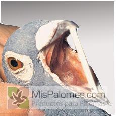 coryza en palomas
