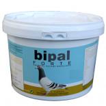 Bipal Forte, racing pigeons