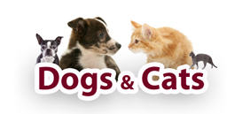 Cats and Dogs products