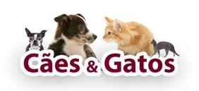 produtos para cães e gatos