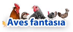 Aves Fantasia