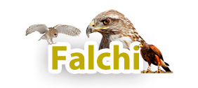 Prodotti per Falchi