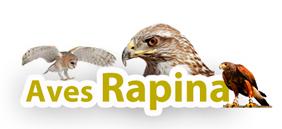 produtos para falcões e aves de rapina