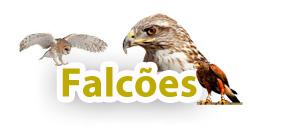 Falcões e Aves de rapina
