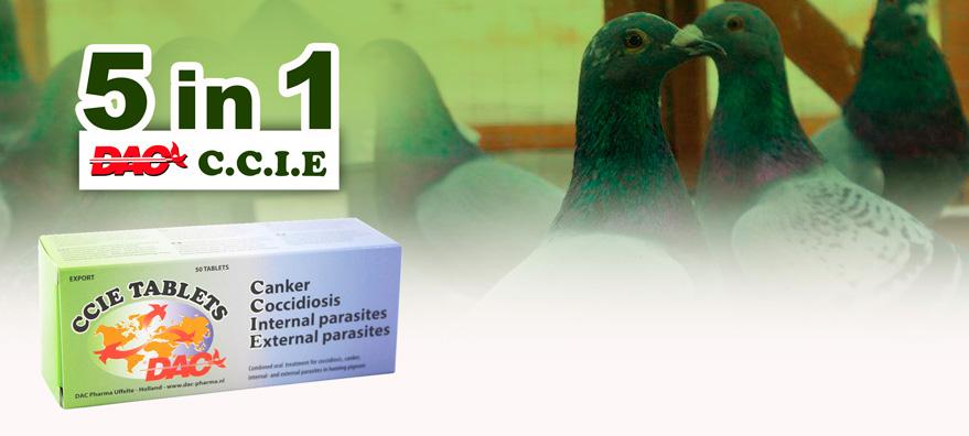 5 en 1 para palomas