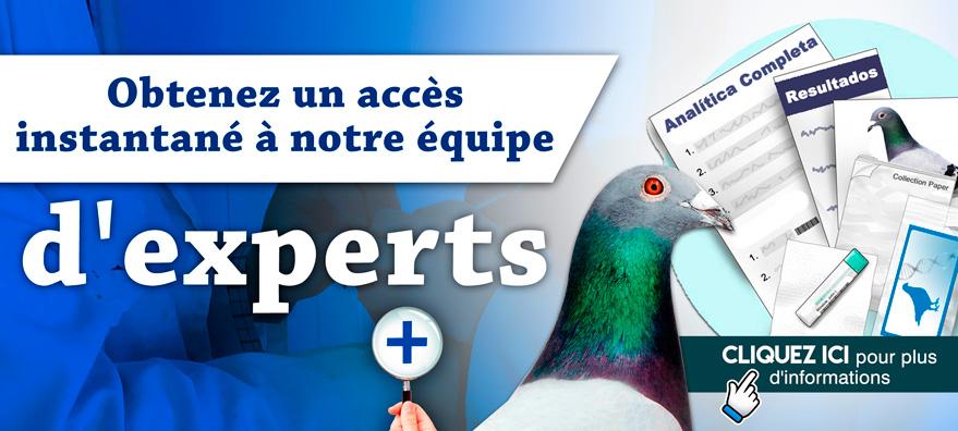 Consultas sobre palomas