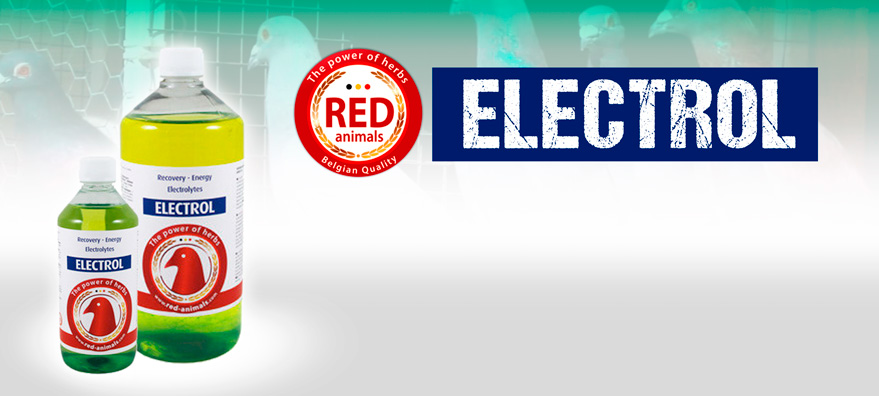 red pigeon electrol
