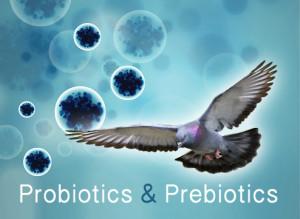 probióticos prebióticos