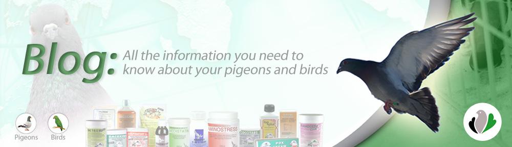 Mercasystems Pigeons Blog